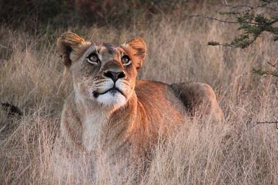 ZULULAND - SOUTH AFRICA