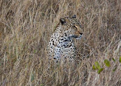 SABI SANDS - SOUTH AFRICA