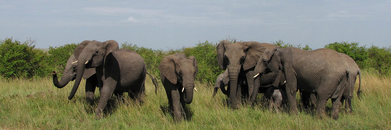 MASAI MARA NATIONAL PARK - KENYA