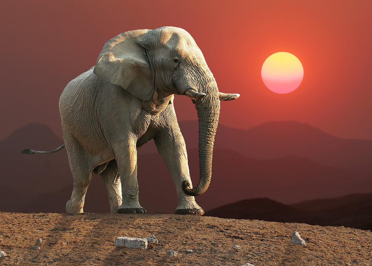 HLUHLUWE NATIONAL PARK - SOUTH AFRICA