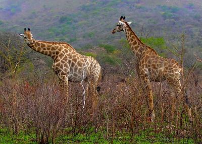 HLUHLUWE - SOUTH AFRICA