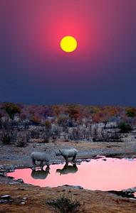 BLACK RHINOS - NAMIBIA