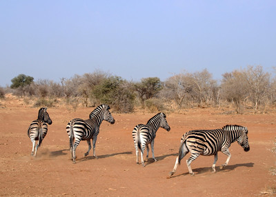 MADIKWE - SOUTH AFRICA