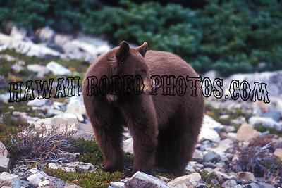 BLACK BEARS-287