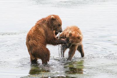 Kodiak Brown Bear-2957