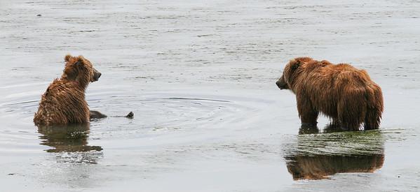 Kodiak Brown Bear-2974
