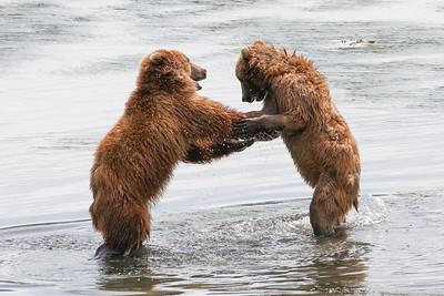 Kodiak Brown Bear-2947