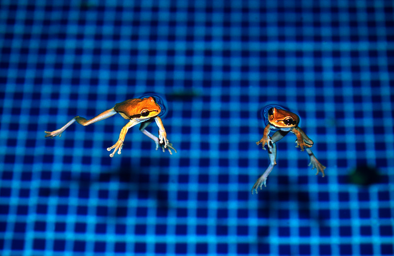 A little conversation in the pool - Corcovado National Park, Costa Rica