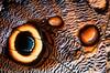 Owl butterfly wing (calygo eurilochius) - Corcovado National Park, Costa Rica