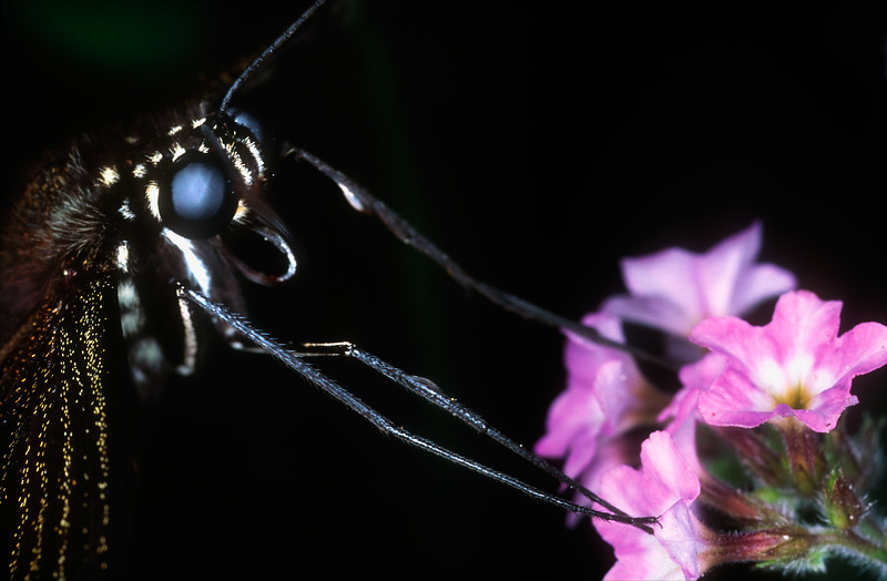 Butterfly feeding - Corcovado National Park, Costa Rica