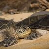 SMART Sea Turtle