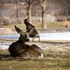 Deer Photobomb