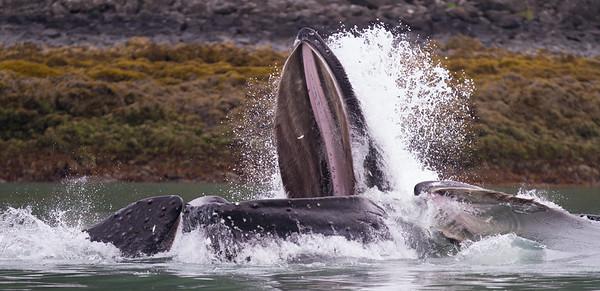 Humpback Whale-2190
