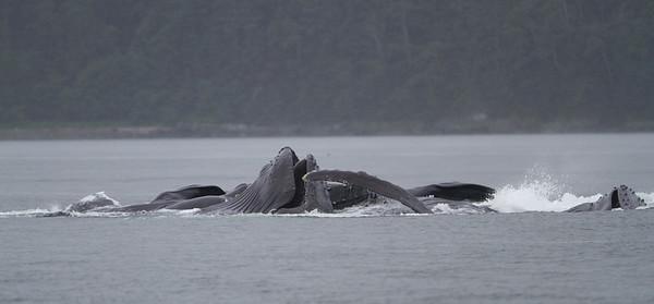 Humpback Whale-1961