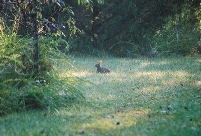 NOT ONE HARE OUT OF PLACE Lake Fayetteville, Arkansas