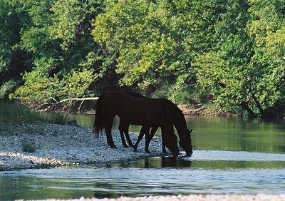 SHADY CHARACTERS Elk River, Missouri