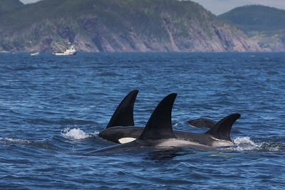 Orca-1756