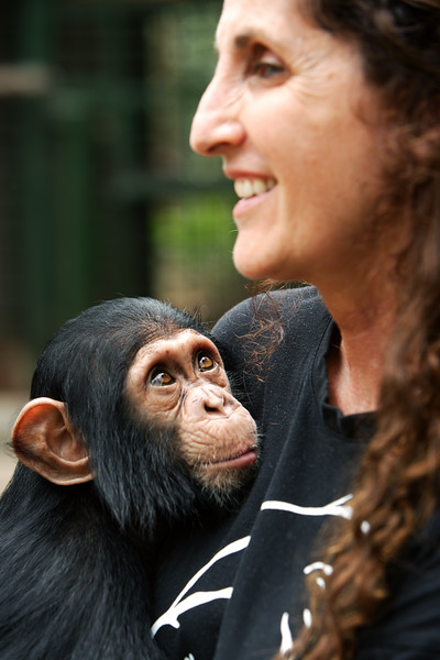 Orphaned chimpanzee - Mefou National Park, Cameroon
