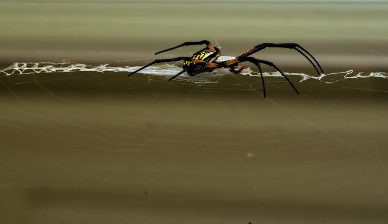 Spider-005