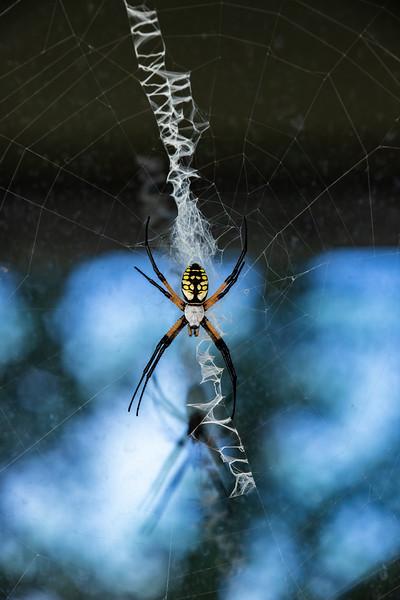 Spider-006