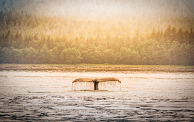 A WHALE OF A SUNSET