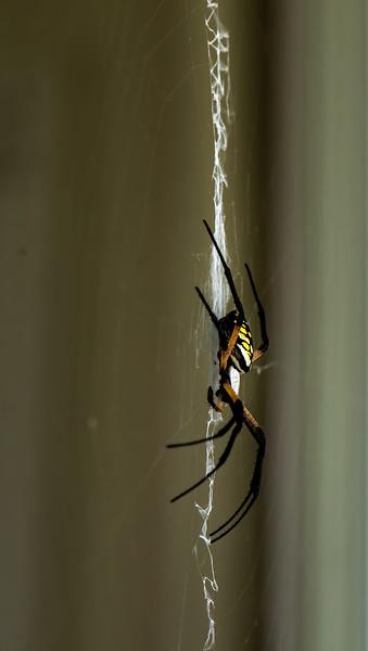Spider-004