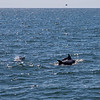 Dolphins-019