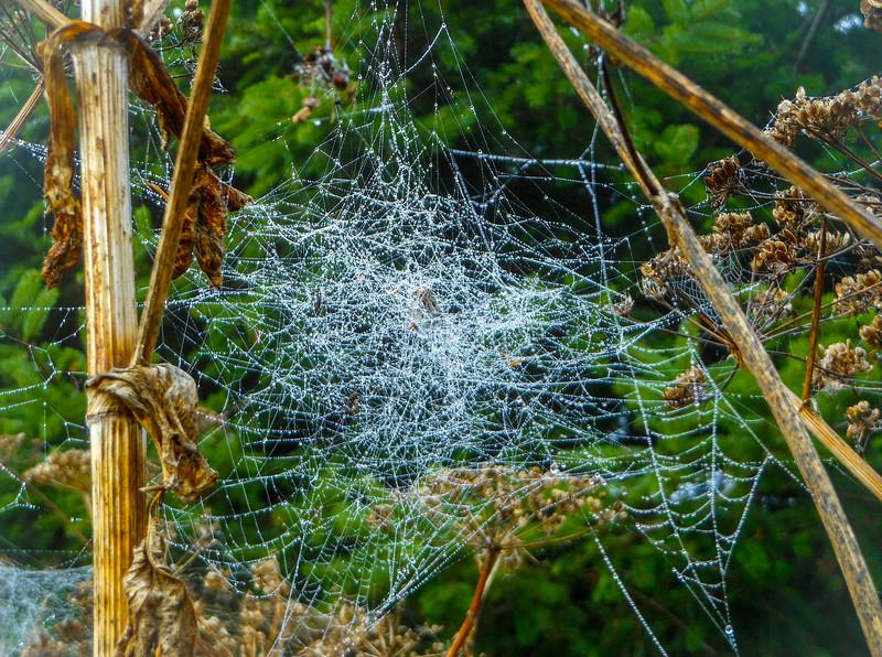 Spider Webzzzz