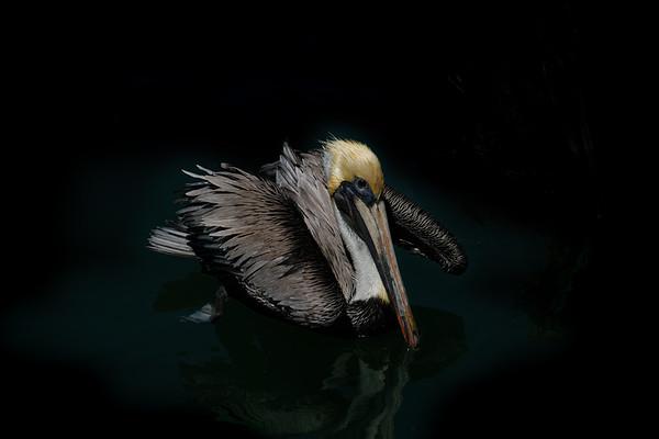 Puerto Pelican - Mexico