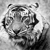 """Print title : """" EYE OF THE TIGER """""""