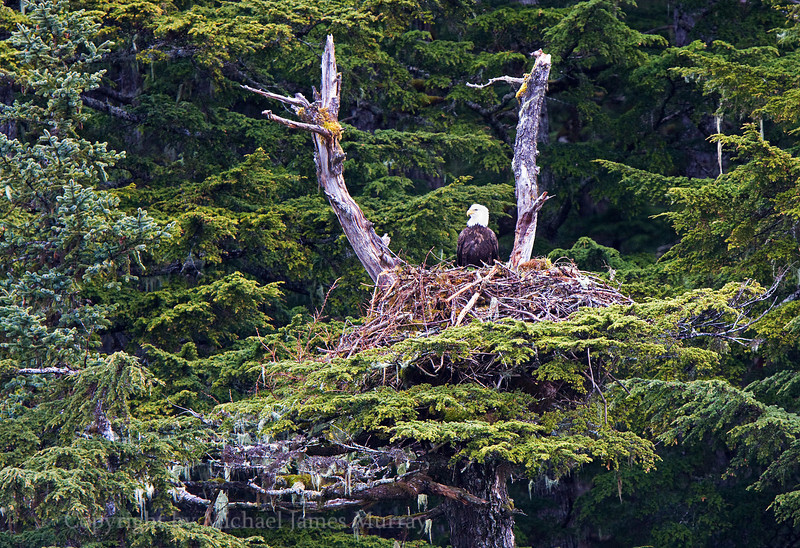 Eagle Nest, Slate Cove, Lynn Canal