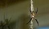 Spider-002