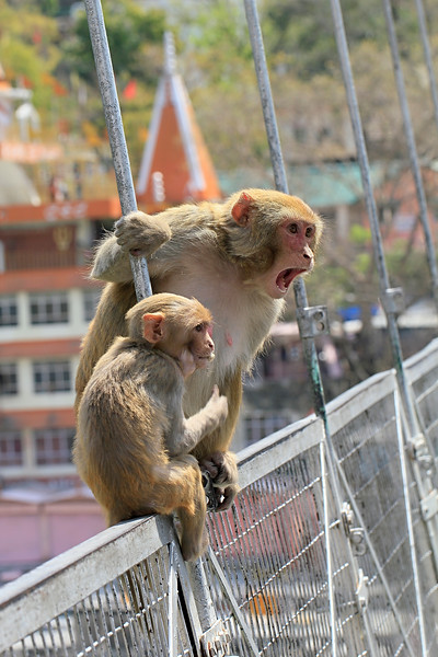 On a bridge over Ganga in Rishikesh / На мосту через Гангу в Ришикеше