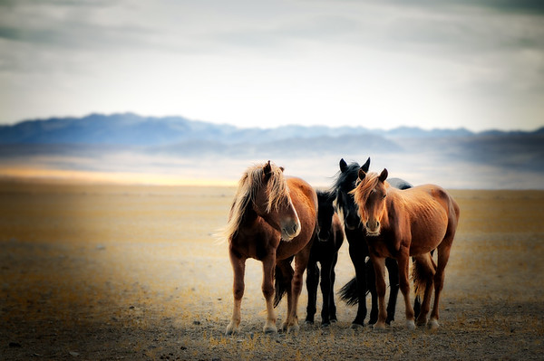 The Girls - Mongolia