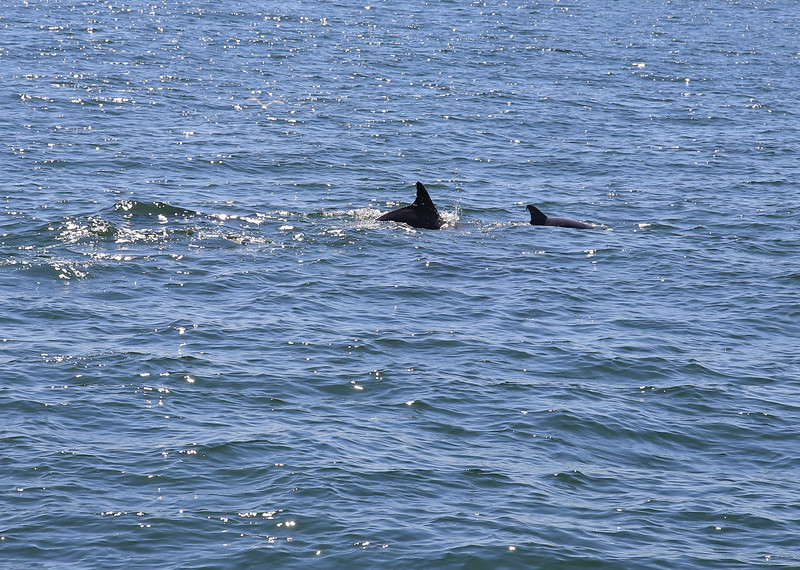 Dolphins-018