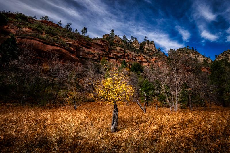good tree-AZ-2019-9406_JPackard.jpg