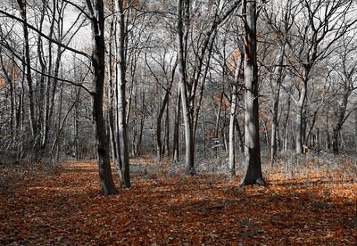Ojibway in November
