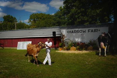 Parading the livestock