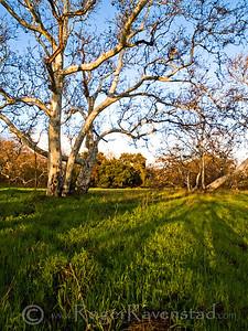 Sycamore Grove Image I.D. #:  O-9-xxx