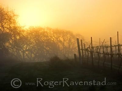 Yellow Fog Image I.D. #:  V-08-002
