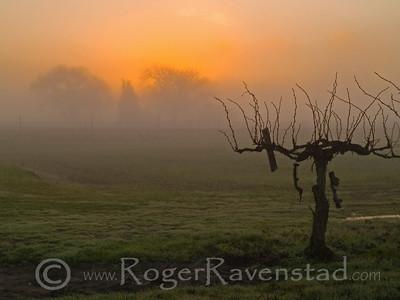 Winter Sunrise  Image I.D. #:  V-09-005
