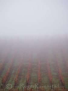 Vineyards in Fog Livermore Wine Country