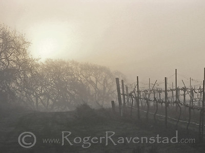 Morning Fog Image I.D. #:  V-08-004