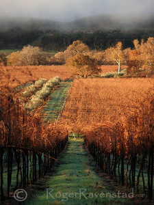 Winter at Olivina (vertical) Livermore Wine Country Image I.D. #:  V-05-003