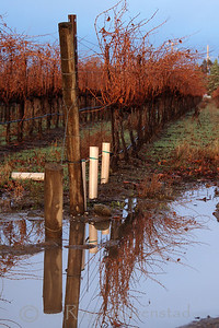 Vineyard Reflection Livermore Wine Country Image I.D. #:  V-05-008