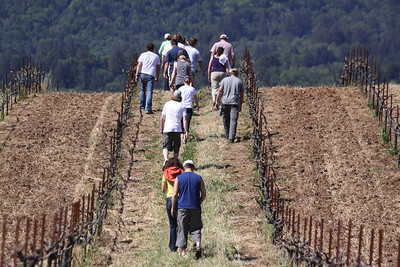 Libation Green Wine Round Up - Bucklin and Dalla Terra