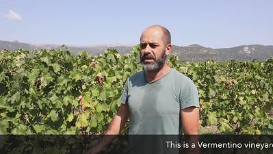 CSM - Fresu vineyard