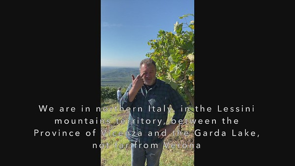 Sandro I - Vineyards introduction