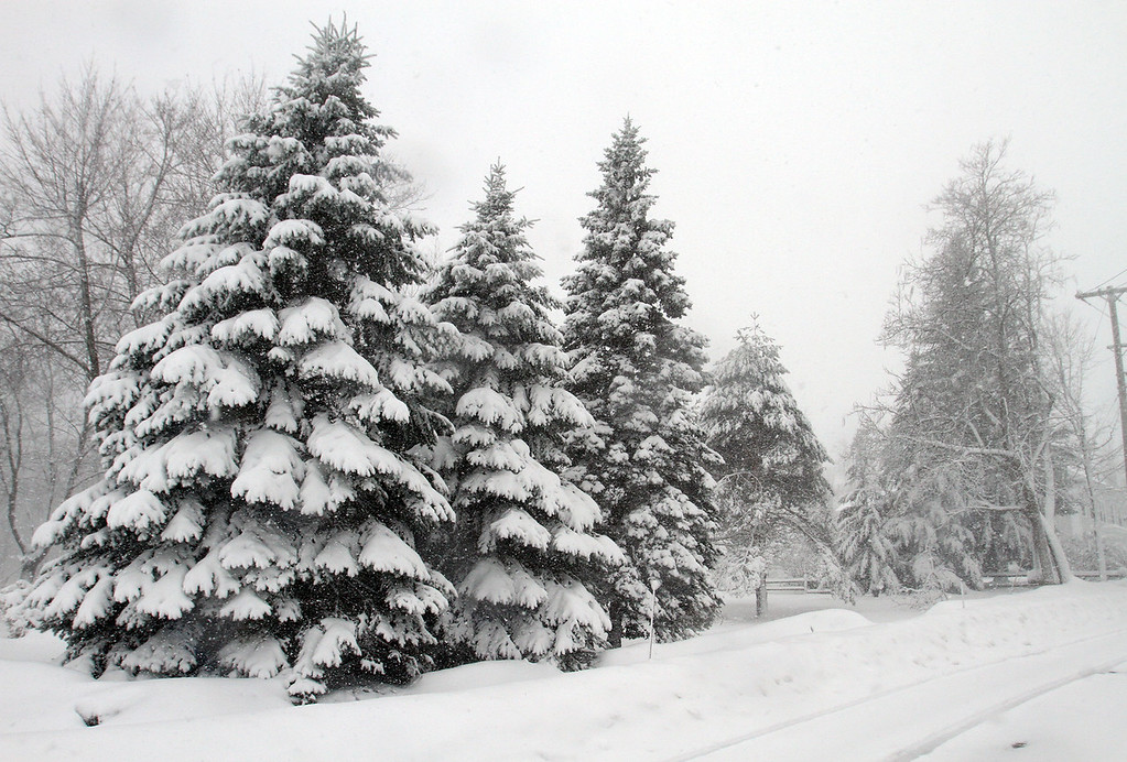 . Snow covered trees on Main Street in Westford. (SUN/Julia Malakie)