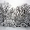Trees on west end of Conestoga Road in Chelmsford.   (SUN/Julia Malakie)